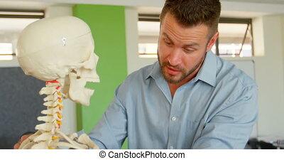 humain, classe, école, mâle, caucasien, squelette, modèle, 4k, prof