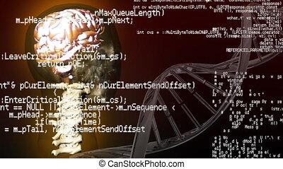 humain, codes, anatomie, interface