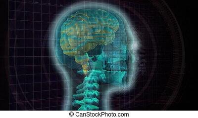 humain, composite, numérique, cerveau
