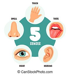 humain, concept, sens, cinq, organes