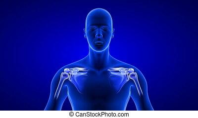 humain, devant, corps, bleu, vue., boucle, gros plan, anatomie, arrière-plan animation, seamless, -, 3d, épaules, balayage, douleur, render, noir