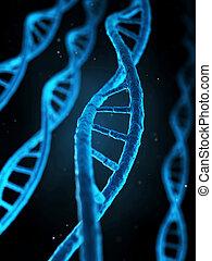 humain, gènes