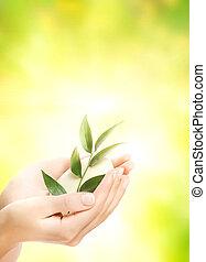 humain, organique, savon, tenant mains