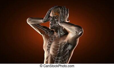 humain, radiographie, balayage