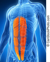 Human abs  - 3d rendered illustration - abs