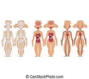 Human anatomy chart infographics, man and woman