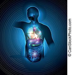 Human anatomy colorful design