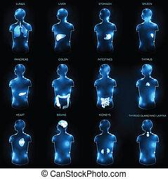 Human anatomy concept. Abstract medical wallpaper. Various...