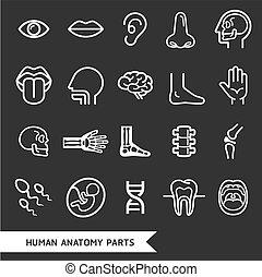 human anatomy - Human anatomy body parts detailed icons set.