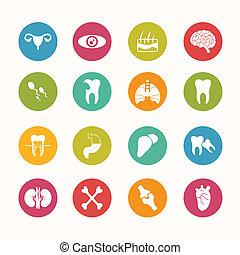 Human anatomy  icons set Circle Series - eps.10