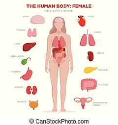 Human anatomy infographic elements with set of internal ...