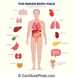 Human anatomy infographic elements with set of internal...