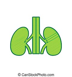 Human anatomy. Kidneys sign. Vector. Lemon scribble icon on white background. Isolated