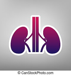 Human anatomy. Kidneys sign. Vector. Purple gradient icon on white paper at gray background.