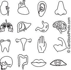 human anatomy line icons set