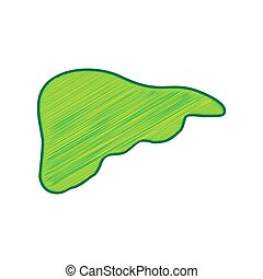 Human anatomy. Liver sign. Vector. Lemon scribble icon on white background. Isolated