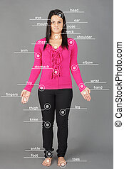 Human anatomy or body: woman posing on grey background