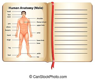 Human anatomy on a page