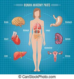 Human Anatomy Parts Infographic Concept