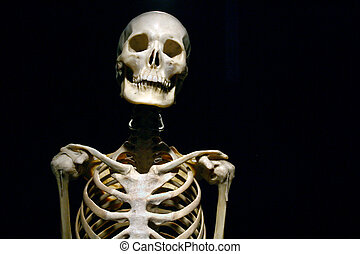 Human Anatomy real skeleton on a black background