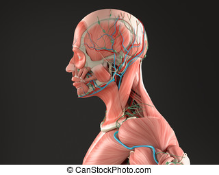 Human anatomy side view head, black