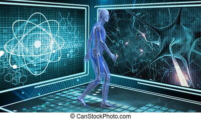 Human anatomy walking