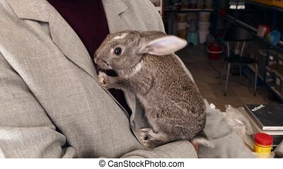 human and animal love, freely circulating in a house rabbits, pet rabbits,
