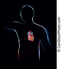 Human and heart, detailed anatomy - Human silhouette and...