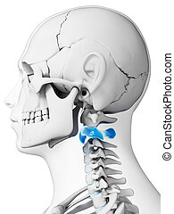 Human Axis vertebrae - 3d rendered illustration - axis...