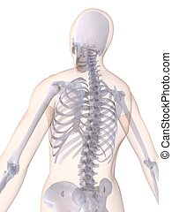 human back - 3d rendered x-ray illustration of a human...