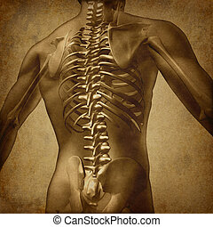 Human Back Grunge Texture - Human back medical document an...