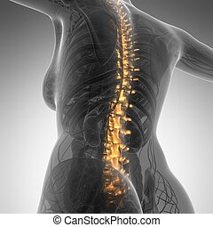 Human backache and back pain with an upper torso body...