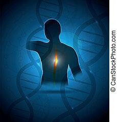 Human back, vertebral column and DNA health care design.
