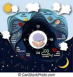 Human biological clock infographics. Cyrcadian rythm. Day...