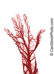 Human Blood Vessels - Close up human blood vessels in male...