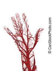 Human Blood Vessels - Close up human blood vessels in male...