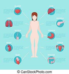 Human Body Anatomy Medical Scheme with Internal Organs. Vector illustration