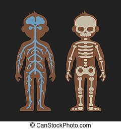 Human Body Anatomy Set. Skeletonand Nervous Systems. Vector