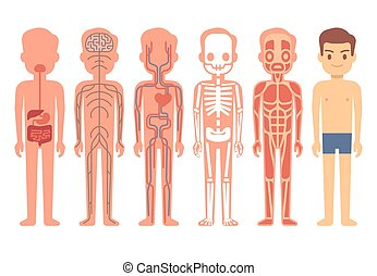 Human body anatomy vector illustration. Male skeleton,...