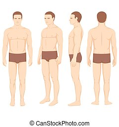 body anatomy, vector man front back side