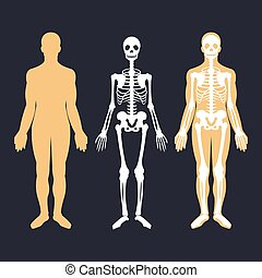 Human body and skeletal system flat