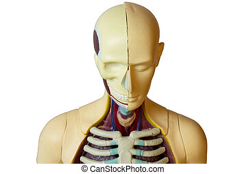 Human body (clipping path isolation)