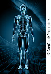 Digital illustration of human body in colour background