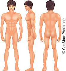 Human Body - Illustration showing the human body