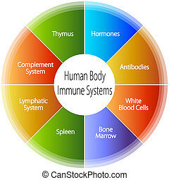 Human Body Immune Systems Chart - An image of a human body...
