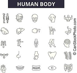 Human body line icons for web and mobile. Editable stroke signs. Human body outline concept illustrations
