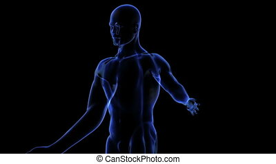 Human body. Loop