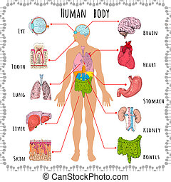 Human body medical demographic - Human body medical...