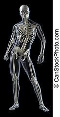 Human Body Medical Scan