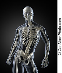 Human Body Medical Scan